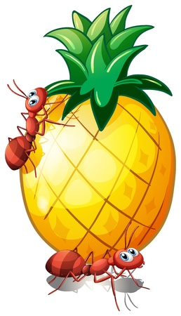 Illustration of a pineapple fruit with two ants on a white background Vector