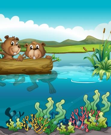 nutria caricatura: Ilustración de los dos castores que juegan en el lago
