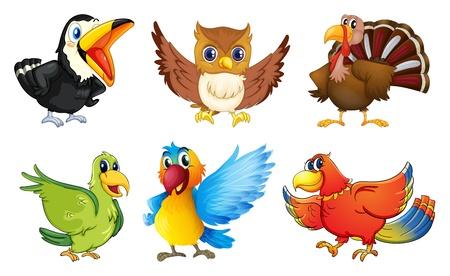aves caricatura: Ilustración de los diferentes tipos de aves sobre un fondo blanco