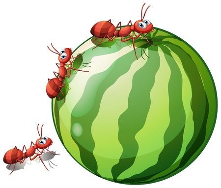 pic: Illustration of a watermelon with three ants on a white background Illustration