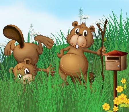 nutria caricatura: Ilustraci�n de los dos castores junto a un buz�n de madera