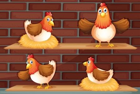 pollitos: Ilustración de los cuatro diferentes posiciones de un pollo