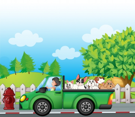 female driver: Illustration of a green car along the street with dogs at the back