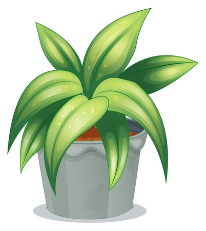elongated: Illustration of a plant with elongated leaves on a white background