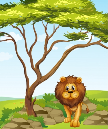 Illustration of a lion under a tall tree Vector