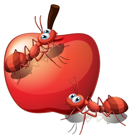 Illustration of the two ants and the red apple on a white background Vector