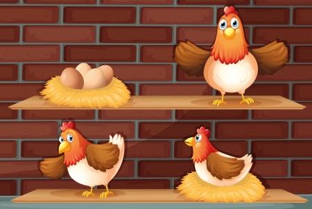 gallina con huevos: Ilustración de las posiciones de una gallina poniendo huevos