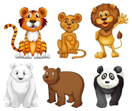 oso caricatura: Ilustración de los seis animales salvajes en un fondo blanco