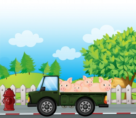 land transportation: Illustration of a green truck with pigs at the back Illustration