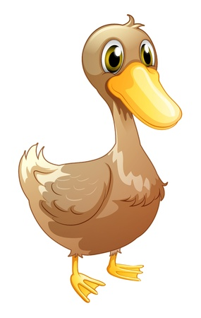 duck feet: Illustration of a brown baby duck on a white background Illustration