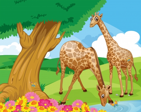 Illustration of the giraffes at the riverbank Vector