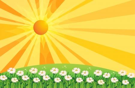 sol caricatura: Ilustraci�n de un jard�n de flores blancas por encima de las colinas Vectores