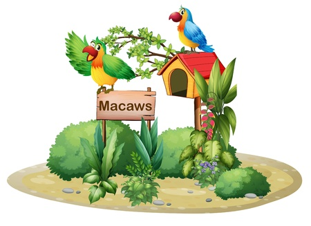 Illustration of the two colorful parrots above a signboard and a birdhouse on a white background Illustration