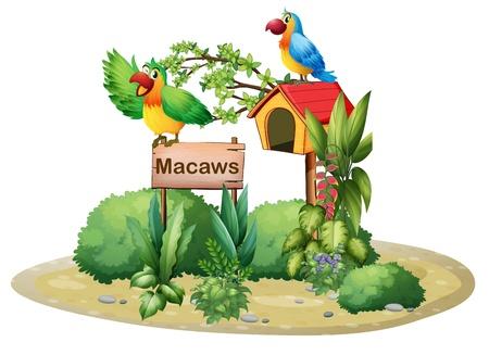 loros verdes: Ilustración de los dos loros de colores por encima de un letrero y una casa para pájaros en un fondo blanco