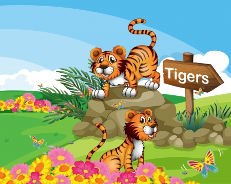 Illustration of the two tigers beside a signboard Vector