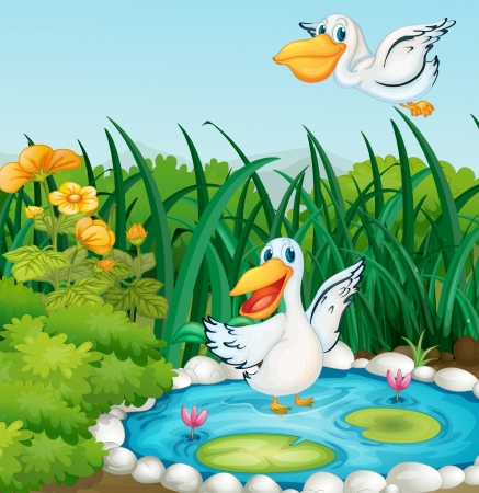 birds scenery: Illustration of a pond with ducks