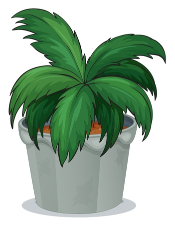 beautification: Illustration of a pot with a green leafy plant on a white background