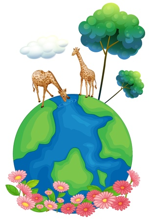 representations: Illustration of the two giraffes above the earth on a white background