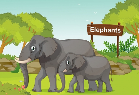 Illustration of the two elephants with a wooden sign board at the back  Vector