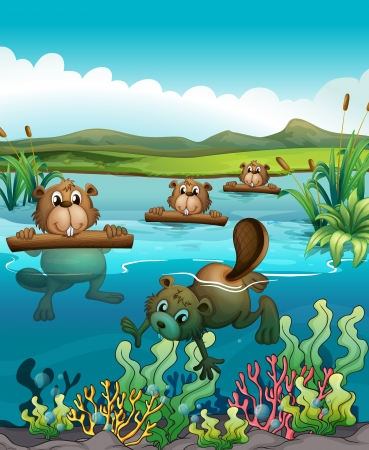 nutria caricatura: Ilustración de los cuatro castores jugando en el río Vectores
