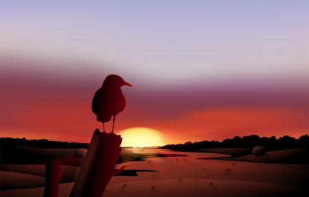 Illustration of a bird in a sunset view of the desert Vector