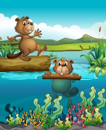 nutria caricatura: Ilustración de los dos castores en el río profundo