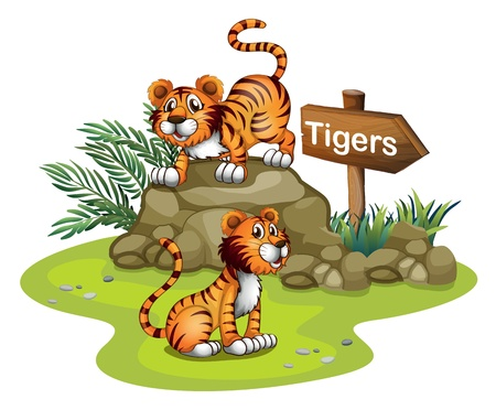 Illustration of the two tigers with a wooden arrow board on a white background Vector