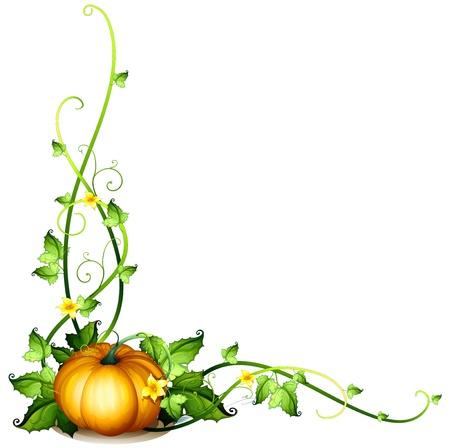 naranja caricatura: Ilustraci�n de una decoraci�n de la vid de la calabaza en un fondo blanco