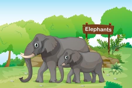 grande e piccolo: Illustrazione degli elefanti con una segnaletica in legno sul retro