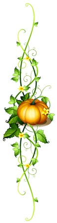 beautification: Illustration of a pumpkin decor on a white background
