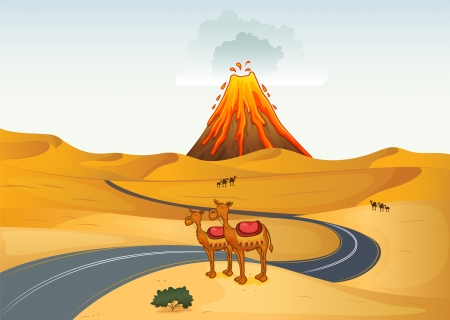 desert road: Illustration of the camels in front of a volcano at the desert