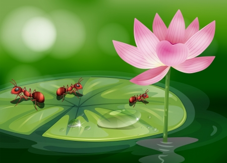 pad  lily: Illustration of the three ants above the waterlily plant Illustration