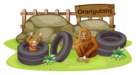 orang: Illusytration of an old and a young orangutan on a white background