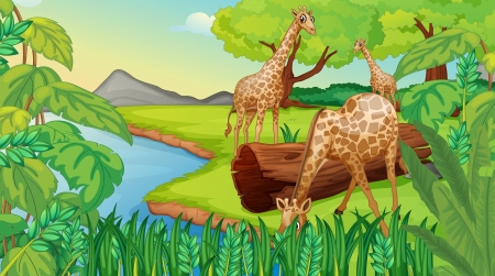 flowing river: Illustration of the three giraffes at the riverside Illustration