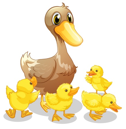chicks: Illustration of the brown duck and her four yellow ducklings on a white background
