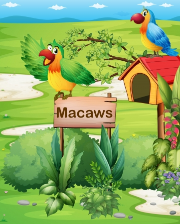 two parrots: Illustration of the two colorful parrots above a signboard and a pethouse Illustration