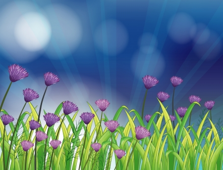 Illustration of a garden with fresh violet flowers Vector