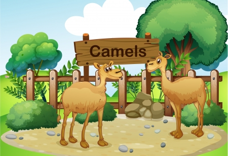 Illustration of the two camels inside the wooden fence with a wooden sign board Stock Vector - 18825484