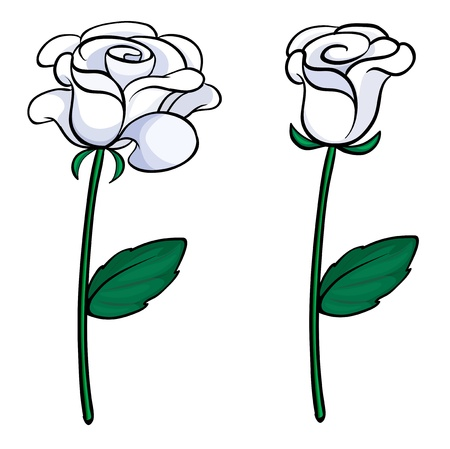 ornamental shrub: Illustration of the two white roses on a white background