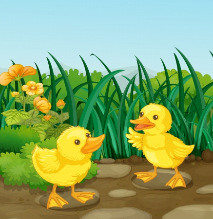 Illustration of the two little ducks in the garden  Vector