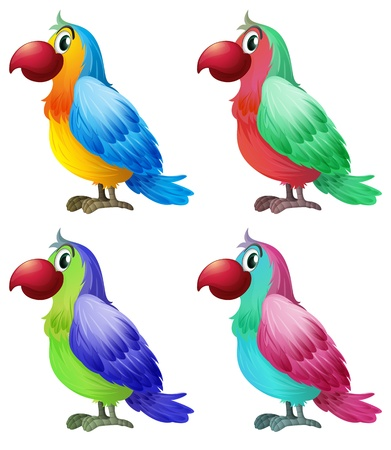 Illustration of the four colorful parrots on a white background Vector