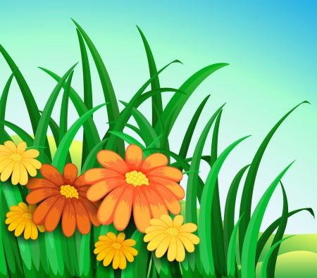 Illustration of a garden in the hill with fresh orange and yellow flowers Vector