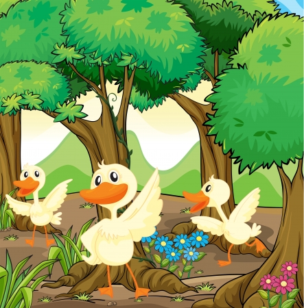 aquatic bird: Illustration of the three white ducks in the middle of the woods