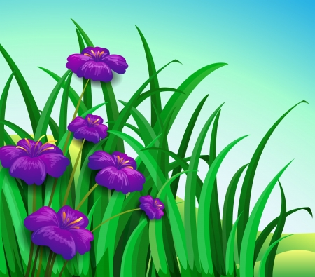 Illustration of a violet flowers in the garden Vector