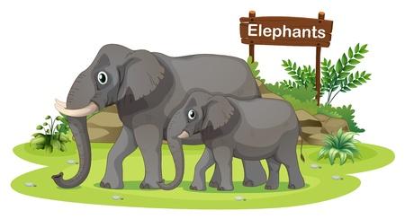 animales del zoo: Ilustración de los dos elefantes cerca del letrero sobre un fondo blanco Vectores