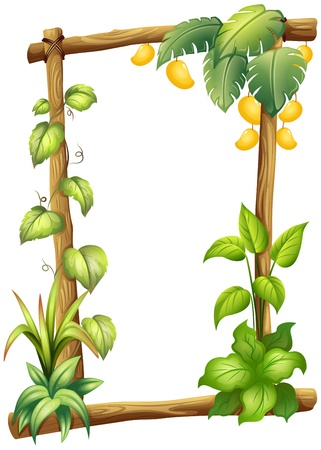 mangoes: Illustration of a frame made of wood with mangoes on a white background Illustration