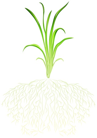 Illustration of a green grass on a white background Illustration
