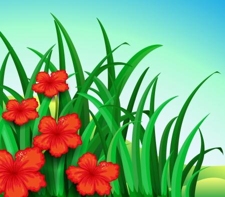 recursos naturales: Ilustración de un jardín de flores rojas