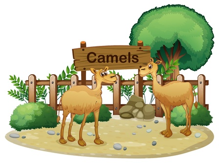 Illustration of a signboard at the back of the two camels on a white background Vector