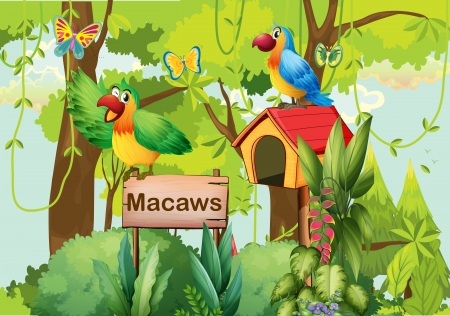 green parrot: Illustration of a forest with a signboard and mailbox Illustration